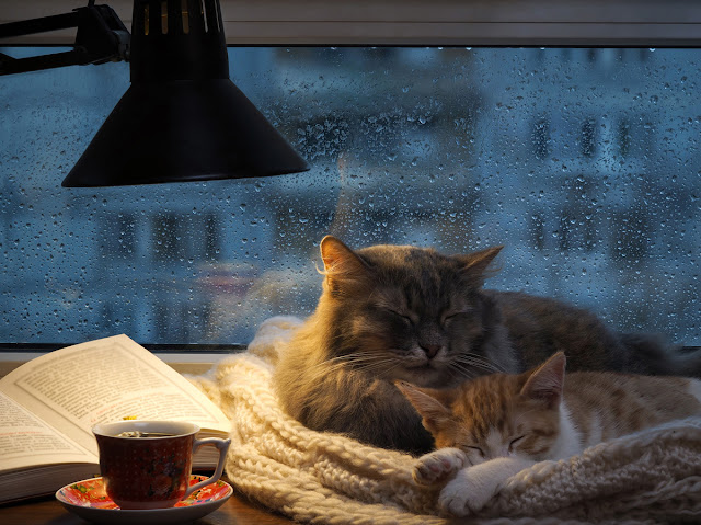 Two cats curled up by a book by the window: The Writer's Pet