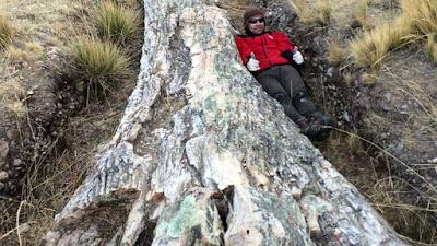 Árvore fossilizada descoberta no Peru indica mudanças ambientais dramáticas