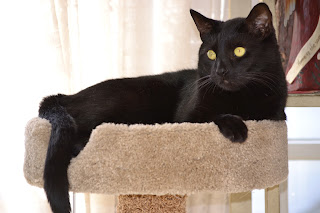 Black cat resting on top of a cat tree
