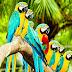 10 lucruri uimitoare despre pasari