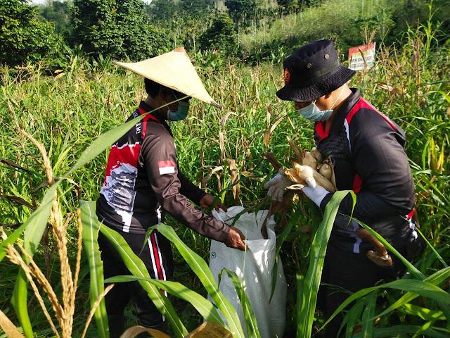 Usai Panen di Spot Pertanian Binmas Noken Polresta Dibersihkan Untuk Ditanam Ulang