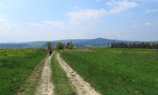 Dzielański Wierch (715 m n.p.m.).