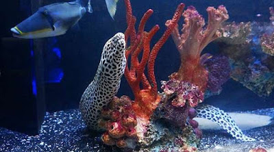 Tips for Organizing Your Saltwater Aquarium Tips for Organizing Your Saltwater Aquarium