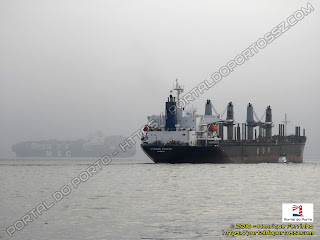 MSC Lily e African Pelican