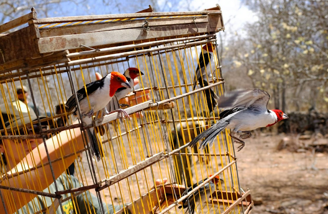 Em Santana do Ipanema,   FPI devolve à natureza   cerca de 140 animais silvestres