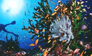 snorkeling di pulau alor nusa tenggara timur