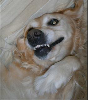 anjing pusing