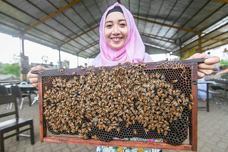 Memanen sarang lebah diWisata Petik Madu Lawang