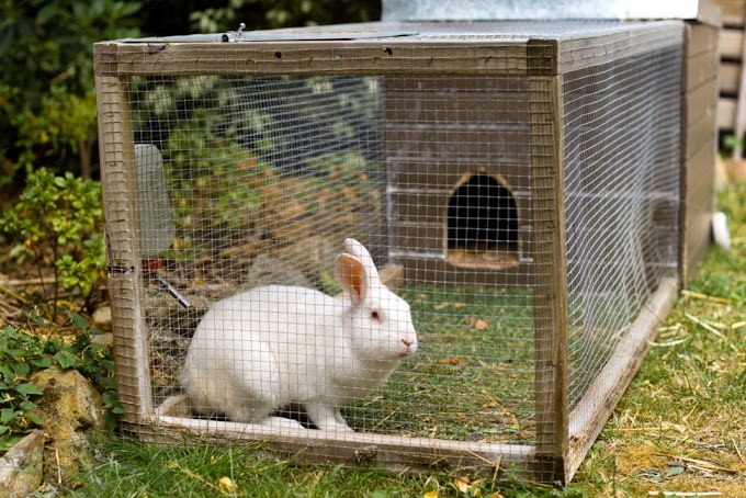 FG engages 17,000 youths in rabbit farming