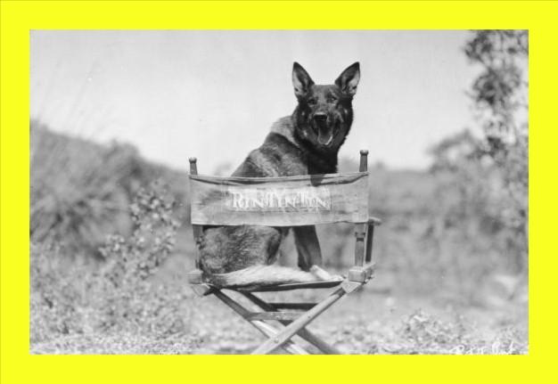 ✅ Warner Bros. hará de RIN TIN TIN, el JOHN WICK de los perros! 😅🐕