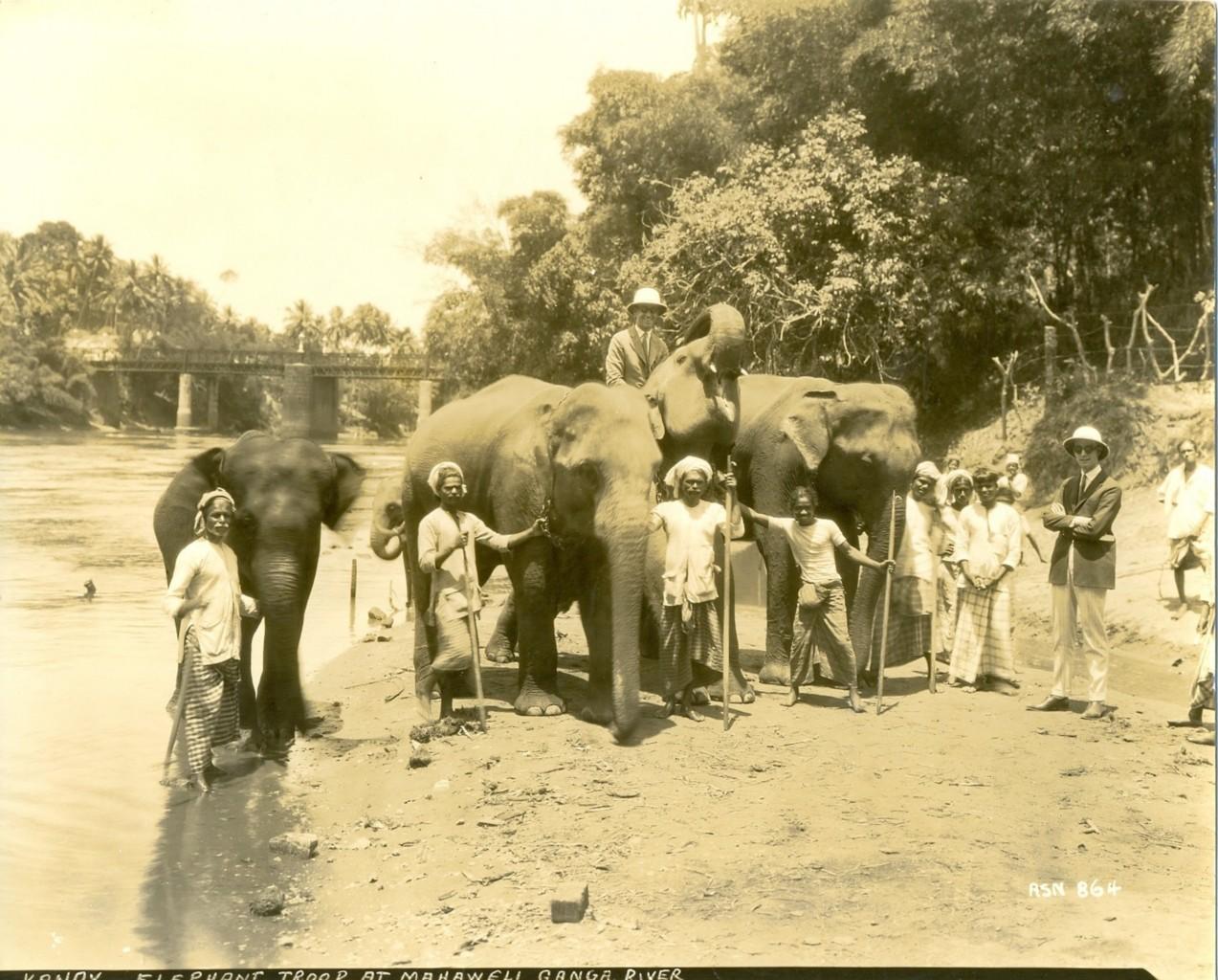 Elephant troop at Mahaweli, Ceylon (Sri Lanka)