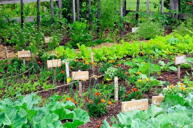 ΟΔΗΓΟΣ για να φτιάξετε τον δικό σας Λαχανόκηπο