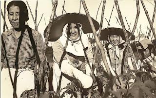Trabalho de Imigrantes Japoneses em Curitiba