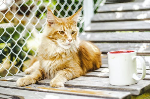 Pet Products - Everything You Need to Know