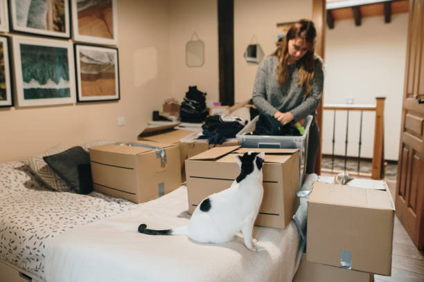 Moving Your Cat to a New Home – How to Survive It
