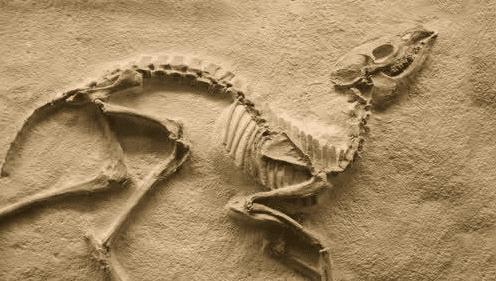 Pembagian Zaman Berdasarkan Arkeologi