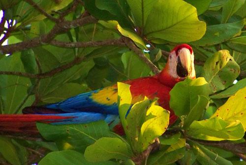 Parrots How Do Parrots Adapt To The Rainforest