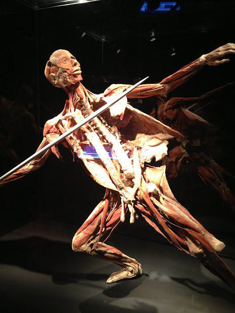Beauty In York City Discovery Times Square - Body Worlds Pulse Exhibit Opens April 26th Nyc