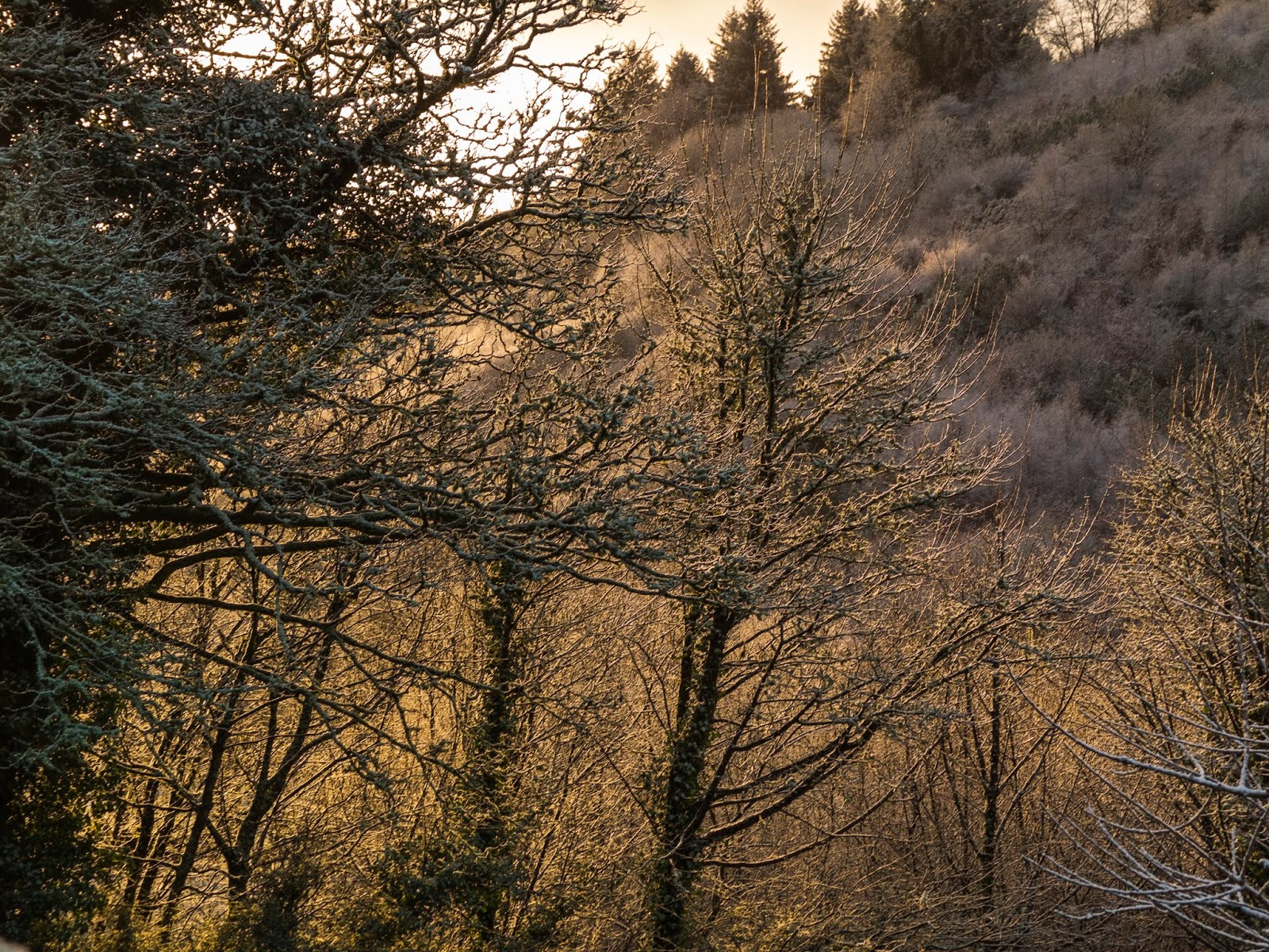 Sun light shining through bare trees in a valley in North County Cork.