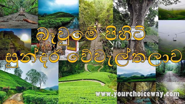බෑවුමේ පිහිටි - සුන්දර වේවැල්තලාව 🍃☘️🌱🎍⛰ (Weweltalawa ⛰🏕) - Your Choice Way