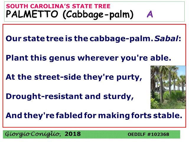 limerick; tree; sabal palmetto; cabbafge palm; swamp cabbage; Sabal palmetto; South Carolina; Giorgio Coniglio