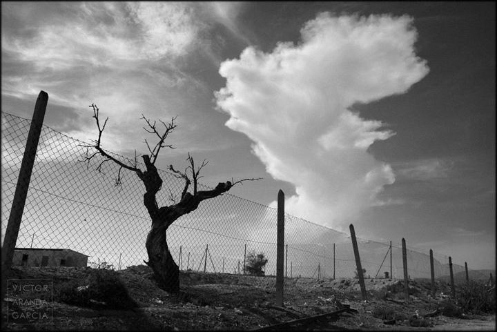 paisaje,fotografia,murcia,nube,limites,serie,arte,fuente_alamo,arbol