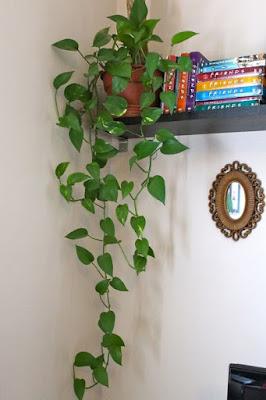 plantas ornamentais que podem ser cultivadas na sombra