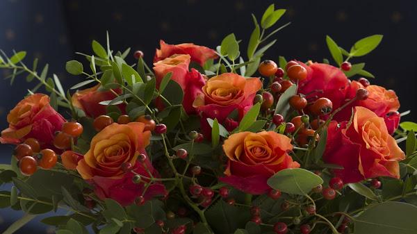 wallpaper bunga mawar hd