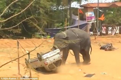 The Dramatic Moment An Angry Elephant Overturns A Car And Goes On A Rampage At A Festival In India [Video, Picture]