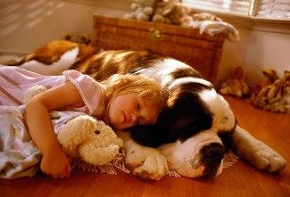 Best Dog Food Prevent Seizures
