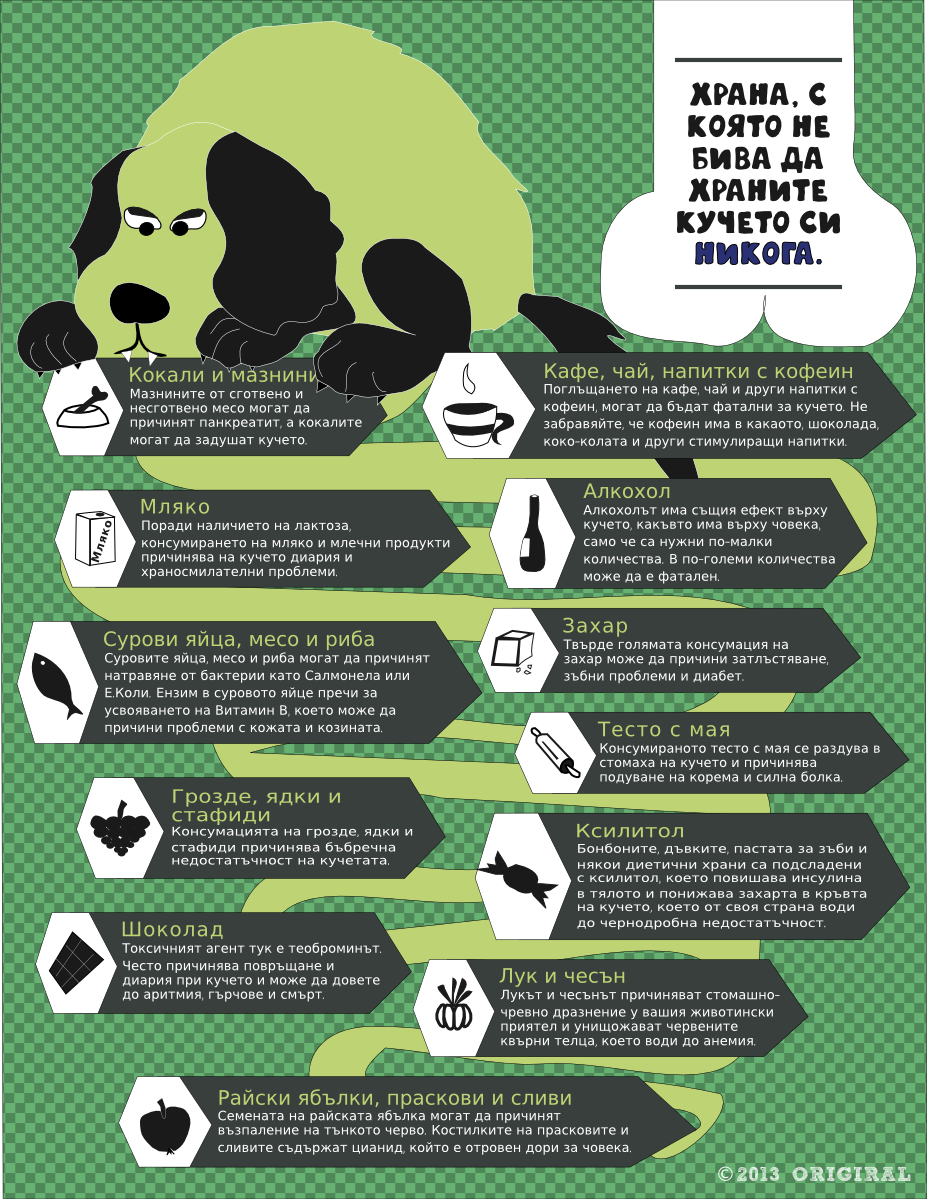dog's food infographic