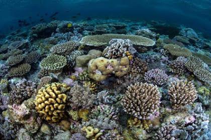Wisata Bawah Laut di Pulau Wangi-Wangi Taman Nasional Wakatobi