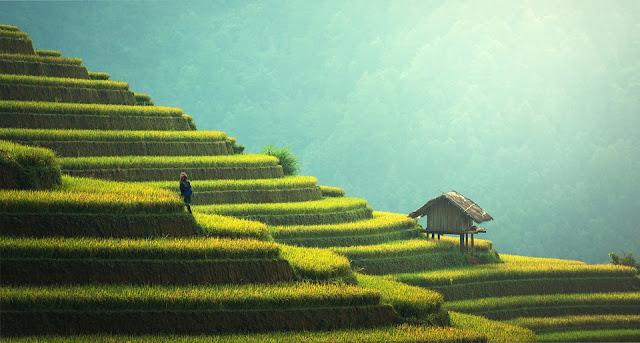 Manfaat dan keuntungan menjadi petani