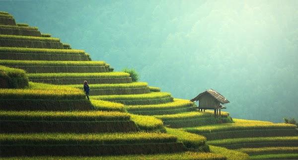 Manfaat dan Keuntungan Menjadi Seorang Petani