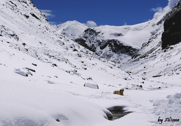 Fruela-Pass-Elvetia-impresii (8)