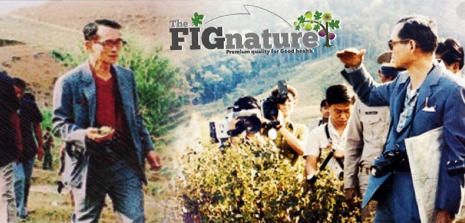 The FIGnature Garden