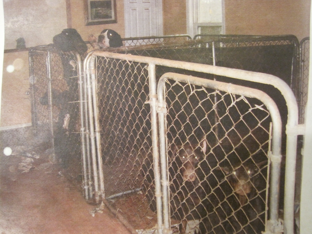 the puppy mill manifesto puppy farmer in mississippi exposed