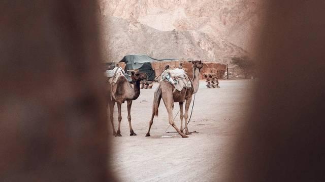 Perang Bani Qinuqa : Foto oleh Gantas Vaiciulenas dari Pexels