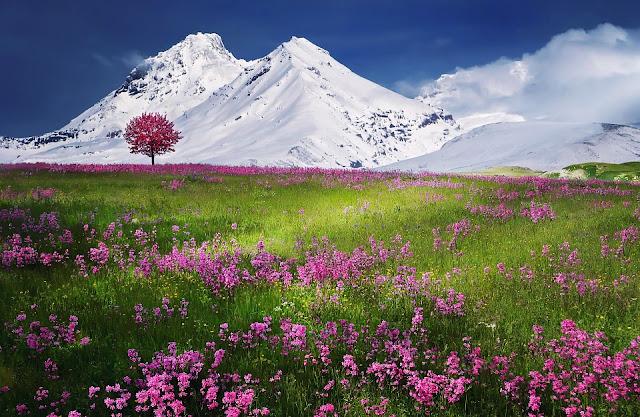 mountains-736886_960_720.jpg