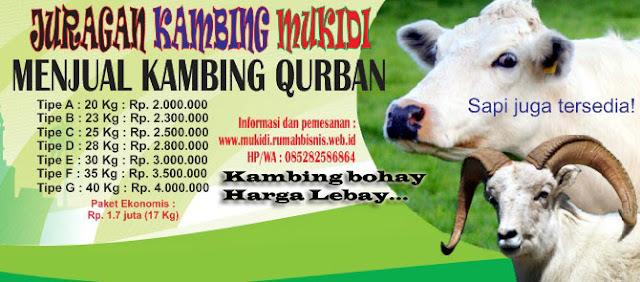Layanan Qurban dan Aqiqah : Kambing bohay harga lebay