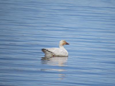 Tule Lake National Wildlife Refuge northern California