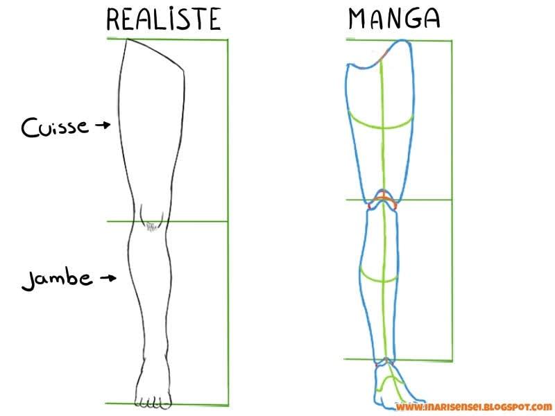 proportions de la jambes