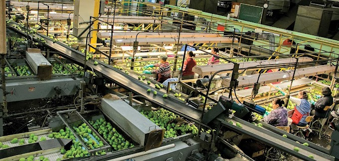 Fruit and vegetables packing for Germany