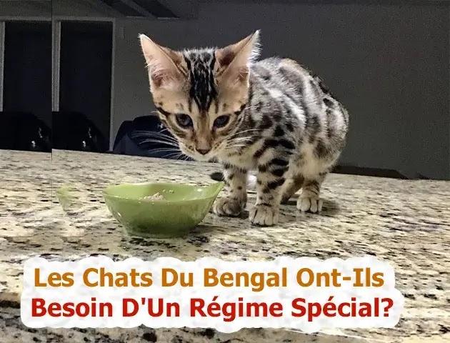 Les Chats Du Bengal Ont-Ils Besoin D'Un Régime Spécial?