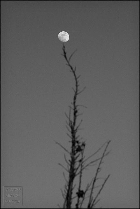 fotografia,luna,cipres,limites,serie,arte
