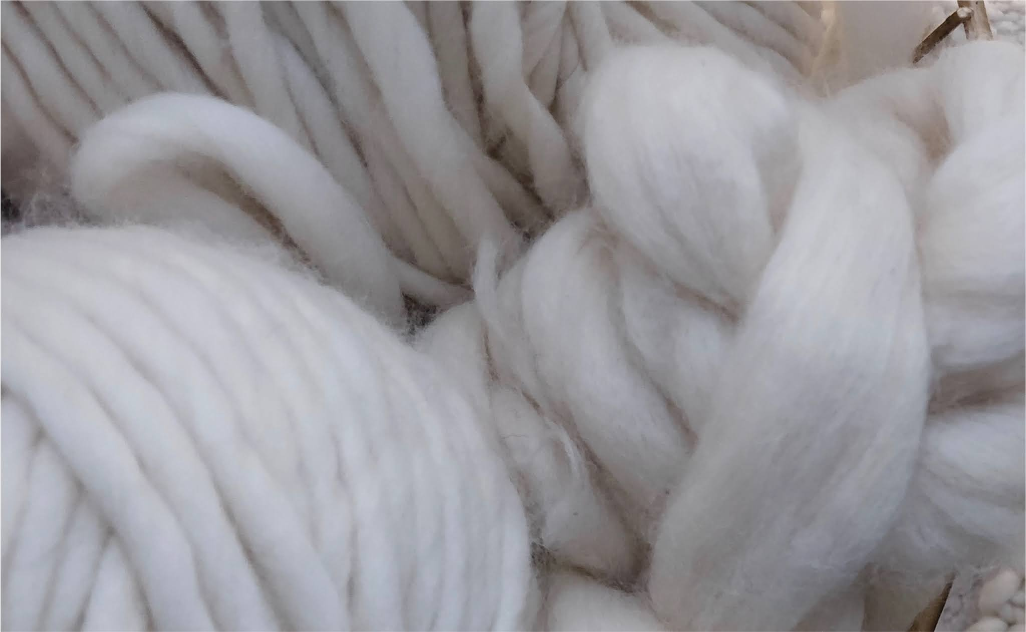 Why Alpaca Is the Ultimate Eco-Friendly, Cruelty-Free Luxury Wool?