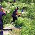 Ελλάδα / Αλβανία: Μονοπάτι ναρκωτικών πάνω από τα βουνά[video]