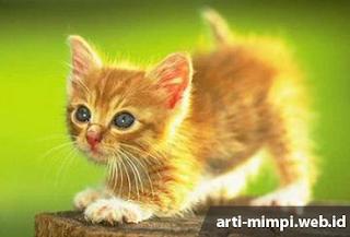 Kucing merupakan salah satu bintang peliharaan yang sangat menggemaskan  -  Digigit Kucing Berdasarkan Primbon Jawa