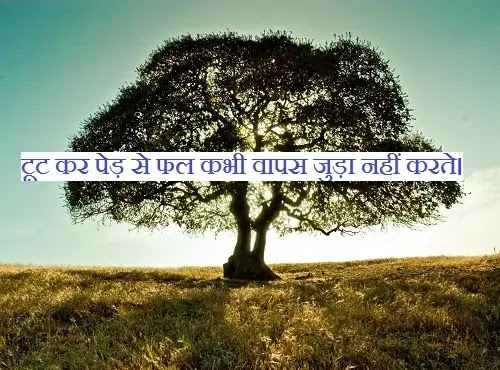 टूट कर पेड़ से फल कभी वापस जुड़ा नहीं करते।