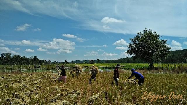 "Membaca indeks kemiskinan di perdesaan selama dua tahun terakhir memunculkan keprihatinan mendalam. Indeks kemiskinan di desa mengalami peningkatan meski pemerintah pusat telah melaksanakan program transfer dana desa (DD) Rp 68 triliun. Setiap desa, dari 74.000 desa di seluruh Indonesia, mendapatkan ""guyuran"" anggaran minimal Rp 750 juta."